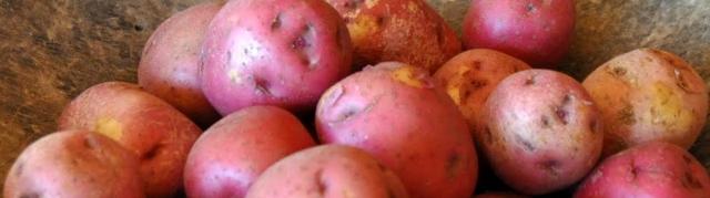potatoes thyme