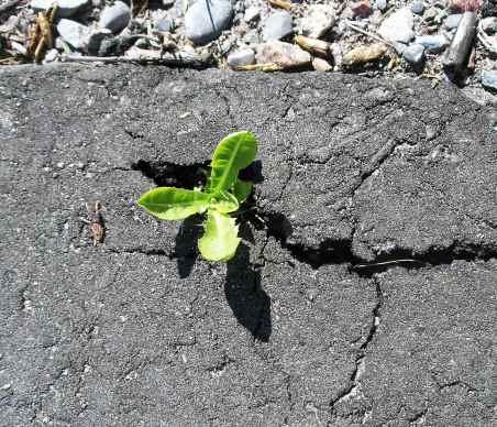 plant-in-pavement-2.jpg